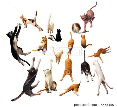 Many cats 3338480