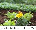 marigold, indian, fritillary 3338753