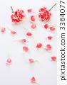 카네이션과 꽃잎 3364077