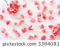 카네이션과 꽃잎 3364081