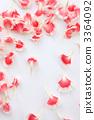 카네이션과 꽃잎 3364092