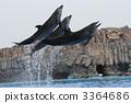 海豚表演 宽嘴海豚 海豚 3364686