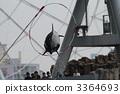 海豚表演 宽嘴海豚 海豚 3364693