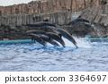 海豚表演 宽嘴海豚 海豚 3364697
