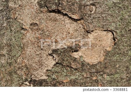 나무 껍질의 소재 3368881