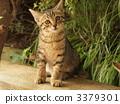 새끼 고양이 3379301