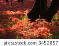 เชือกมุกสีแดง 3452857