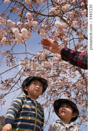 천엽벚나무, 소년, 남자애 3465130