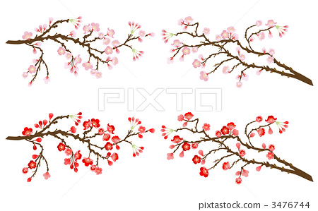 Sakura branch and plum branch 3476744