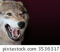 wolf 3536317