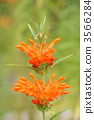 reonochisu, bloom, blossom 3566284