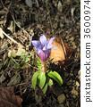 林地路径 植物 植物学 3600974