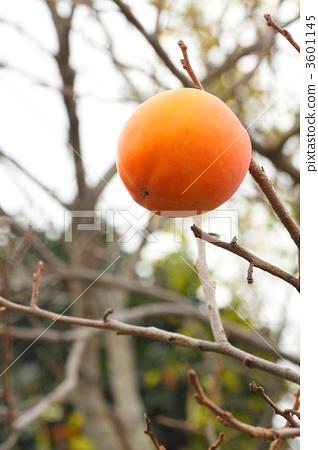 persimmon 3601145