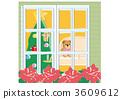 在聖誕節窗口邊的一品紅 3609612