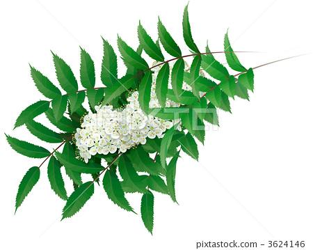 Nanakamado flower 3624146