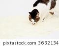 고양이 3632134