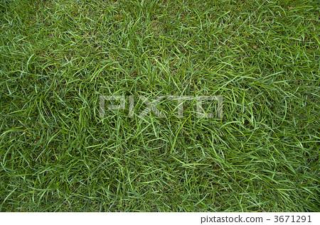 green grass texture 3671291