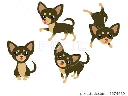 Dog Chihuahua Black & Tan 3674639
