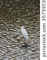 조류, 물새, 들새 3679959