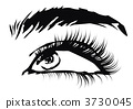 eyebrow, eyelash, eye 3730045