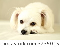 混合的狗 3735015
