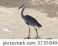 留鳥 野生鳥類 野鳥 3735649