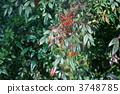 ผลไม้ทางใต้เปลี่ยนเป็นสีแดง 3748785