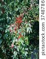 ผลไม้ทางใต้เปลี่ยนเป็นสีแดง 3748786
