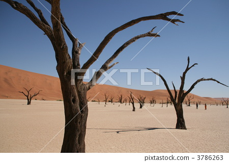 Namibia Namib Oasis in the former desert 3786263
