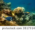 水族館 海洋 水下 3817914