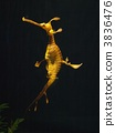 Seahorse Weedsey Dragon 3836476