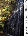 Autumn's dragon twin flowerfall 3842025