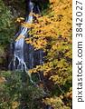 Autumn's dragon twin flowerfall 3842027