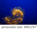 feeler, tentacle, tentacles 3882267
