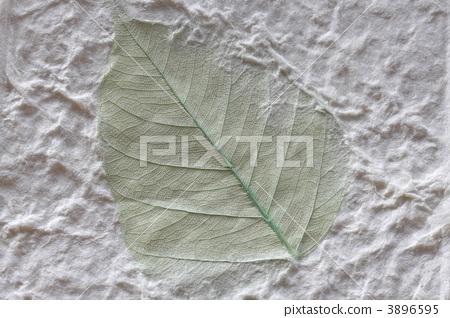 日本蔬菜標本washi 3896595