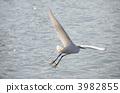 heron, egret, white 3982855