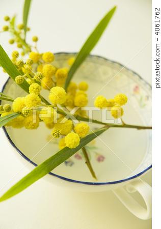 acacia, mimosa, bloom 4061762