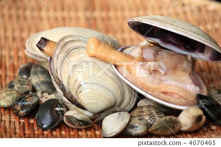 大蛤蜊和蛤蜊 4070465