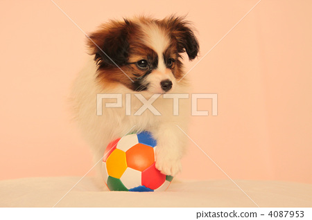 small dog, puppy, doggy 4087953