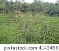 อินโดนีเซีย,บาหลี,ทวีปเอเชีย 4143469