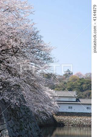 Hikone Castle in full bloom of cherry blossoms 4144879