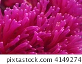Coral (coral) 4149274