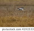 鳥兒 鳥 冬候鳥 4191533
