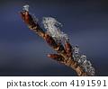 꽃눈, 갈색, 브라운 4191591