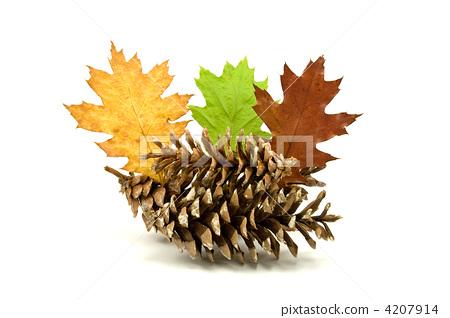autumnal decoration 4207914