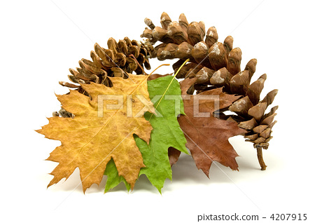 fallen leaves and pine cones 4207915