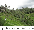 rice terrace, bali, rural districts 4218564