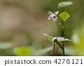 Small Flower of Spring ~ Tsubosmile ~ 4276121