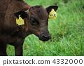 farm, animal, livestock 4332000