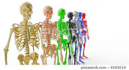 해골, 골격, 인체 4343014
